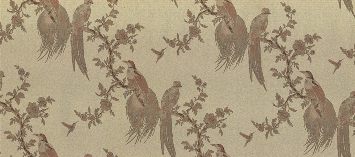 Pavone Wallpapers Collection